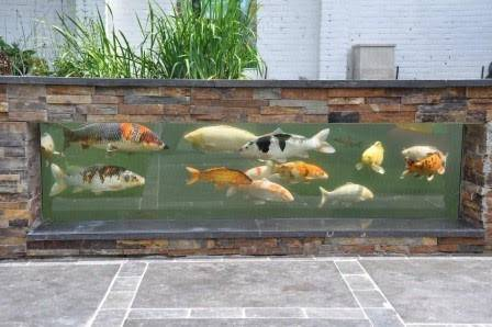 Vijvers van gogh 39 s iris hoveniers for Vissen vijver